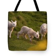 Lambs On The Meadow Tote Bag
