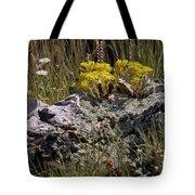 Lanceleaf Stonecrop Sedum 1 Tote Bag