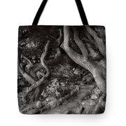 Landscape - The Forbidden Forest Tote Bag