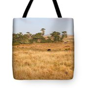 Landscape With Cows Grazing In The Field . 7d9957 Tote Bag