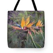 Large Bird Of Paradise Flower In Full Bloom  Tote Bag