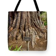 Large Cypress Tree Trunk In Carmel Mission-california  Tote Bag