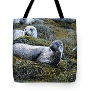Large Harbor Seal Colony In Scotland Tote Bag