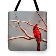 Last Snow Of Winter, Cardinal Tote Bag