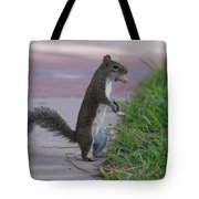 Last Squirrel Standing Tote Bag