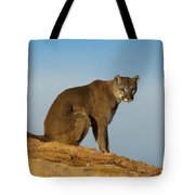 Late Afternoon Foray Tote Bag