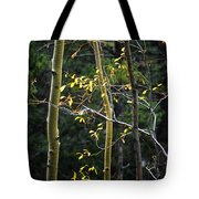 Late Aspen Tote Bag
