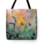 Late Summer Rain From The Forest Floor Tote Bag