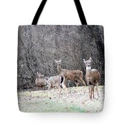 Late Winter Whitetails Tote Bag