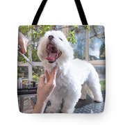 Laughing Adorable White Dog Is Groomed Tote Bag