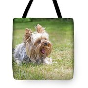 Laughing Yorkshire Terrier Tote Bag