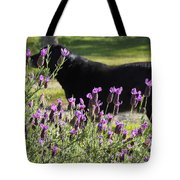 Lavender And Black Lab Tote Bag