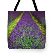 Lavender Dream Tote Bag