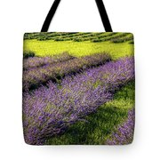 Lavender Fields Forever Tote Bag by Kendall McKernon