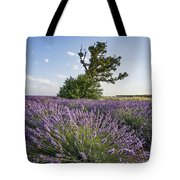 Lavender Provence  Tote Bag by Juergen Held