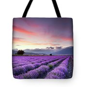 Lavender Season Tote Bag by Evgeni Dinev