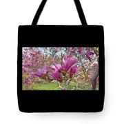 Lavender Tulip Tree Blossums   Spring     Indiana Tote Bag
