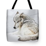 Laying Out In A Winter Storm II Tote Bag