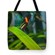 Lazy Butterfly Tote Bag