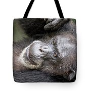 Lazy Chimp - Lowry Park Zoo Tote Bag