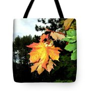 Leading The Way Into Fall Tote Bag