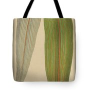 Leaf Of A Mountain Cabbage Tree Or Bush Flax Tote Bag