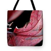 Leaf Study I Tote Bag