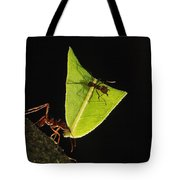 Leafcutter Ant Atta Sp Carrying Leaf Tote Bag