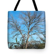 Leafless In Autumn Tote Bag