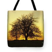 Leafless Tree Against Sunset Sky Tote Bag