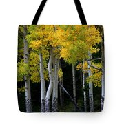 Leaning Aspen Tote Bag