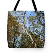 Leaning Birch Tote Bag