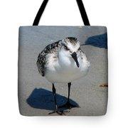 Least Sandpiper Tote Bag