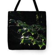 Leaves In Filtered Light  Tote Bag