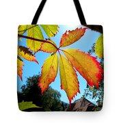 Leaves In Sunlight 4 Tote Bag