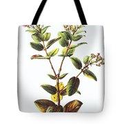 Lehua Ohia Art Tote Bag