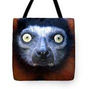 Lemur Glare Tote Bag