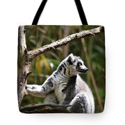 Lemur Love Tote Bag