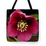 Lenten Rose Tote Bag