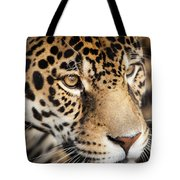 Leopard Face Tote Bag by John Wadleigh