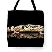 Leopard Gecko Eublepharis Macularius Isolated On Black Background Tote Bag