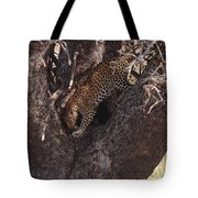 Leopard In Tree Tote Bag