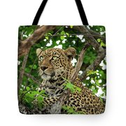 Leopard With Piercing Eyes Tote Bag