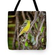 Lesser Goldfinch H57 Tote Bag