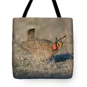 Lesser Prairie Chicken Tote Bag