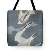Lesser Tern Tote Bag