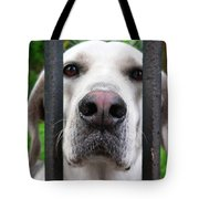 Lets Go For A Walk Tote Bag