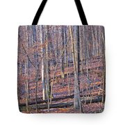 Letting The Light In Tote Bag