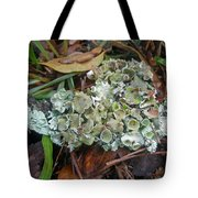 Lichen On Dead Branch Outer Banks North Carolina Usa Tote Bag