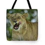 Licking Lion Tote Bag
